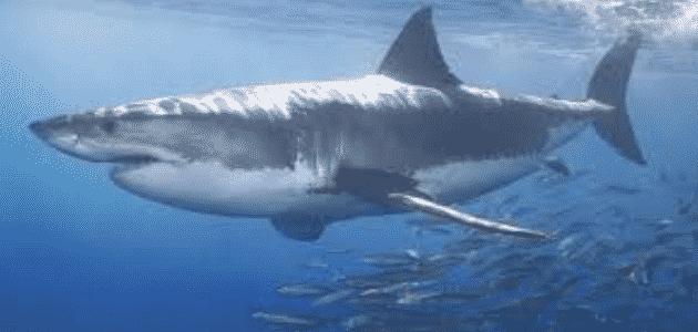 تعريف بسيط عن القرش