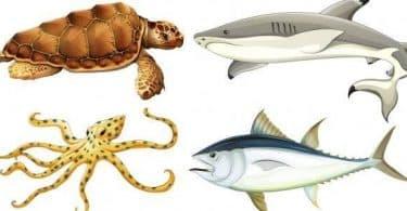 بحث عن تصنيف الكائنات الحية وتنوعها