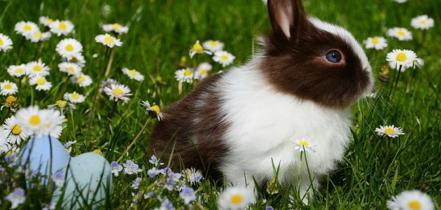تفسير ذبح الأرنب في المنام