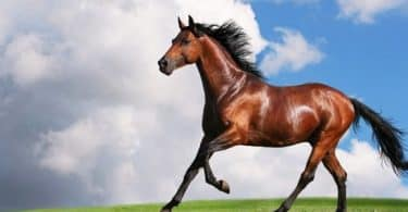 تفسير رؤية الحصان بجميع ألوانه في المنام