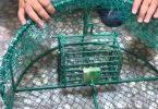 طريقة صنع مصيدة العصافير
