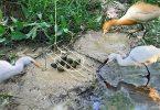 كيفية صيد الطيور البرية