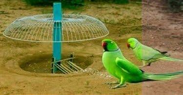 كيفية صيد العصافير بطريقة سهلة