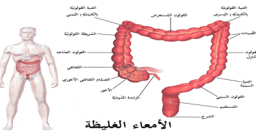 ما هو الجهاز الهضمي ومكوناته