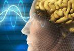 ما هي وظيفة الذاكرة