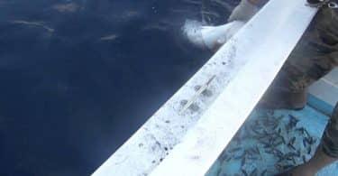 موسم الصيد في ليبيا