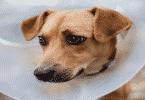 أمراض الكلاب الجلدية وكيفية علاجها