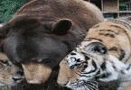 عالم الحيوانات المفترسه الخطيرة