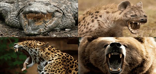 صيد الحيوانات المفترسة في العالم