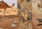 تكيف الكائنات الحية مع البيئة الصحراوية