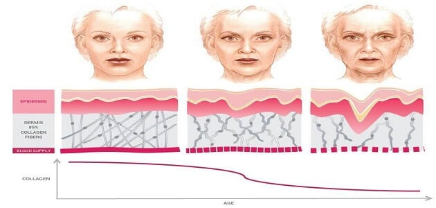 where is collagen in the body?