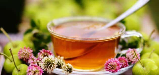 تجارب شاي البرسيم الأحمر