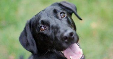 تفسير حلم الكلاب السوداء
