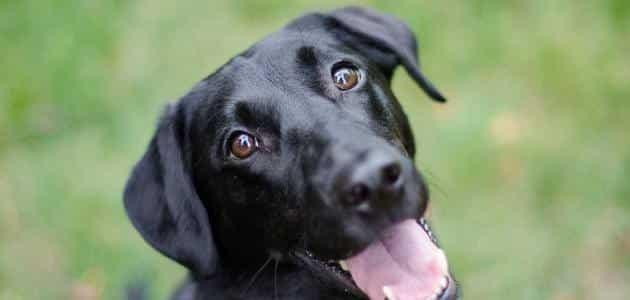 تفسير حلم الكلاب السوداء بالتفصيل معلومة ثقافية