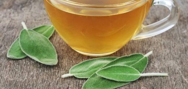 ما فوائد شاي المورينجا