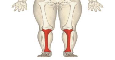 كيف اقوي عضلات الفخذ والساق