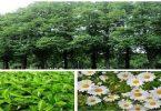 أهمية النبات للحياة
