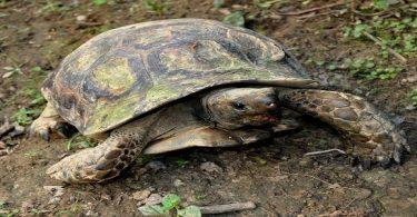 أين تعيش السلاحف في مصر
