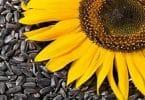 ما اضرار بذر دوار الشمس