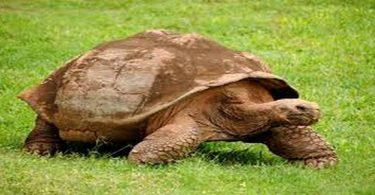 تربية السلاحف البرية بالصور