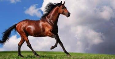 رؤية الحصان في المنام للامام الصادق