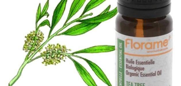 فوائد زيت شجرة الشاي للبشره والشعر