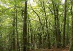 كيفية حماية الغابة