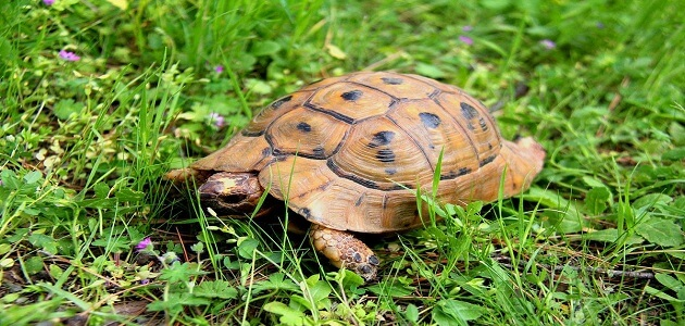 how do i know the age of a turtle?
