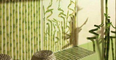 كيف الاعتناء بنبات البامبو