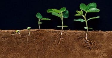 كيف تتنفس النباتات المائية ونباتات اليابسة
