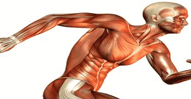 كيف نحافظ على الجهاز العصبي والعضلي