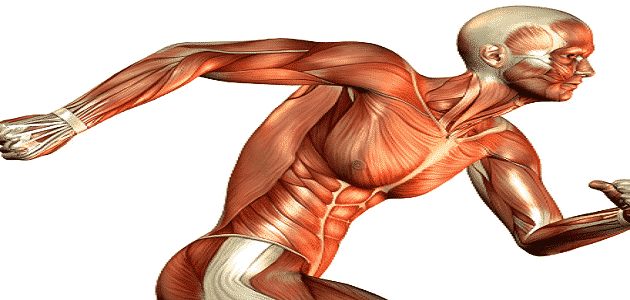 How to maintain the nervous system and muscular
