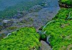 ما أهمية الطحالب