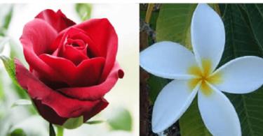 ما الفرق بين الزهور والورود