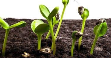ما هي فوائد نبات القرض وأضراره