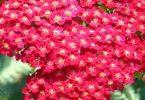 مظاهر تنوع النباتات الزهرية وتصنيفها