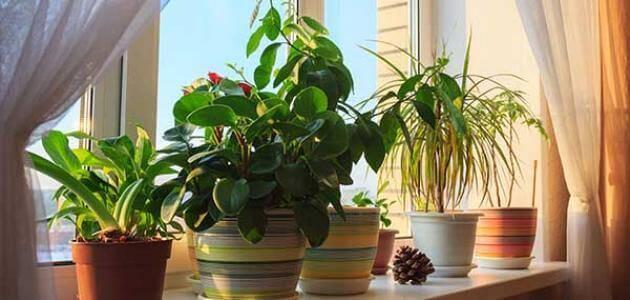 أنواع النباتات وأسمائها وصورها