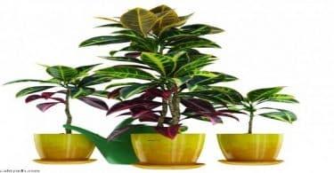أنواع نباتات الزينة بالصور والأسماء