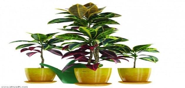 أنواع نباتات الزينة بالأسماء معلومة ثقافية