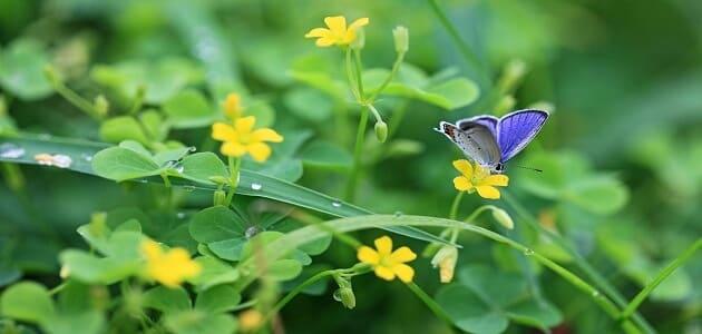 أهم فوائد النباتات الطبيعية
