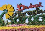 أين توجد حديقة الزهور في دبي