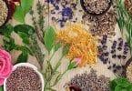 الاعشاب التي لها فوائد طبية