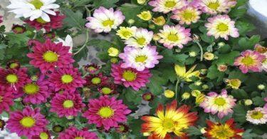 تنوع النباتات الزهرية وتصنيفها
