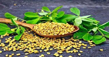 فوائد أوراق الحلبة الخضراء والصفراء