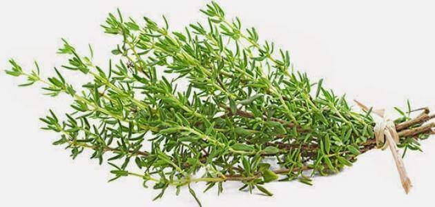 Benefits of Thyme Food