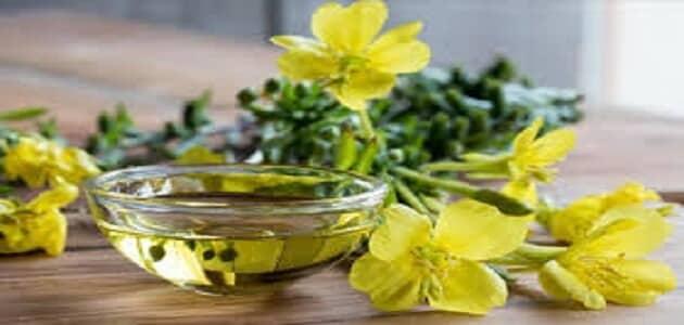 فوائد واضرار زيت زهرة الربيع المسائيه