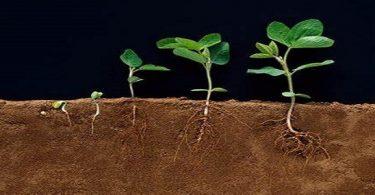 كيفية امتصاص النباتات الماء والأملاح المعدنية