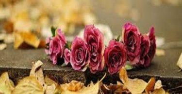 كيف تحافظ على الورد مدة أطول