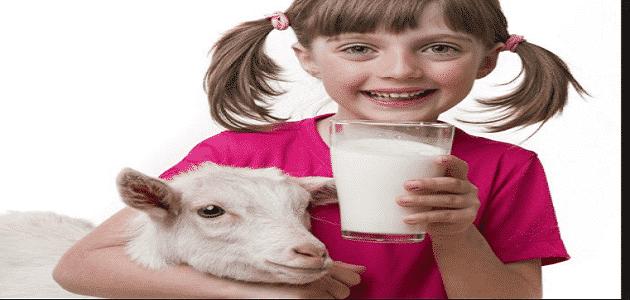 ما فوائد حليب الماعز للأطفال الرضع