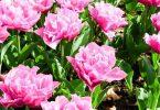 ما هو تصنيف النباتات الزهرية واللازهرية ؟